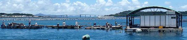 本部イカダでフカセ釣り!~初心者、ファミリー、カップルでの沖縄釣りレジャーに最適!