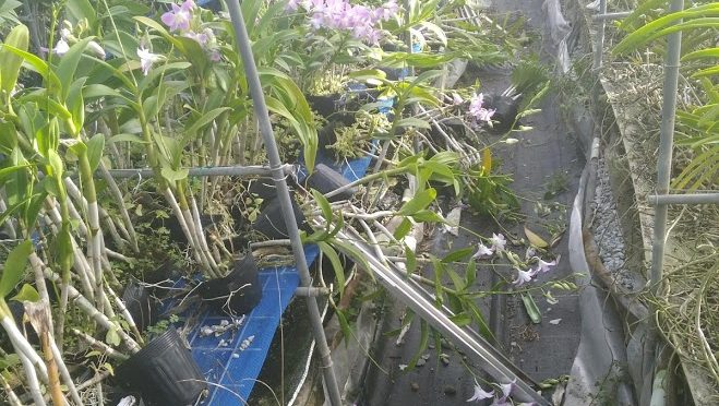 農家の息子がメディアでは報道しない(できない?)農作物のリアルな台風の被害を晒す。