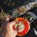 苗植え道具「なかよしくん」とamazonに販売してる苗植え道具を購入したら作業がとても捗った!
