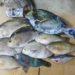 【ポイント公開!】沖縄のフカセ釣りで大物を釣り上げるには!?本土のグレ釣りの技術はほとんど通用しない!?